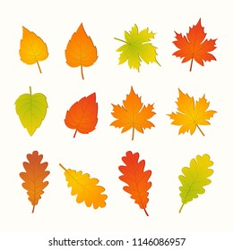Set of autumn leaves isolated on white background, vector