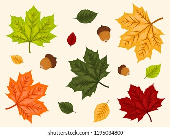 Set of autumn leaves over bright background