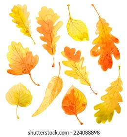Set of autumn leaves, vector watercolor. Leaves on a white background.