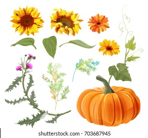 Set of autumn plants: orange pumpkin, yellow sunflowers, gerbera daisy flower, thistle, small green twigs, red berries of asparagus, white background. Digital draw, collection for design, vector