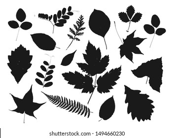 Set of autumn silhouettes of leaves isolated on white background.