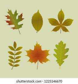 Set of autumn tree leaves shapes
