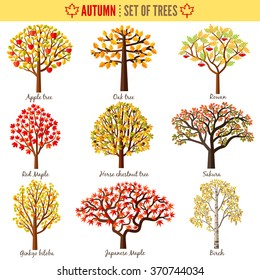 Set of autumn trees on white background. Apple tree, Oak tree, Rowan, Red maple, Horse chestnut tree, Sakura, Ginkgo biloba, Japanese maple, Birch. Vector illustration