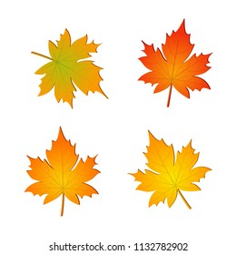 Set of autumn vector maple leaves isolated on white background