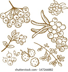 Set of b berries in sepia 2. Hand drawn illustration.