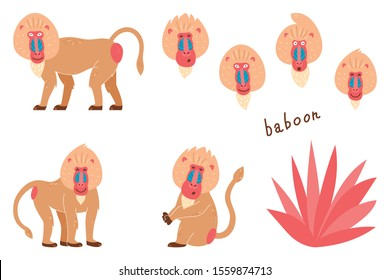 Set of baboons in a cartoon style. Children's pictures with animals. Cartoon illustration of a baboon vector icon on a white isolated background.