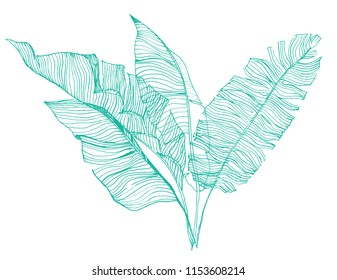 Tropical Leaves Line Drawing Images Stock Photos Vectors Shutterstock Doodle tropical leaf drawing nature line art motif design. https www shutterstock com image vector set banana leaves illustration tropical vector 1153608214