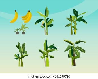 set of banana tree - icon vector