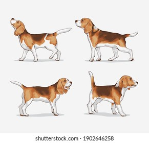 set of beagle dog in different poses, vector ilustration.