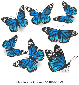 Set of beautiful blue butterflies isolated Vector.