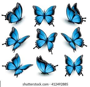 Set of beautiful blue butterflies. Vector.