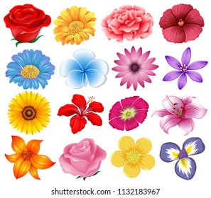 A set of beautiful flowers illustration