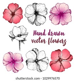 set of beautiful hand drawn flowers in retro style. Anemones drawing with line-art on white backgrounds. Hand drawn vector illustration