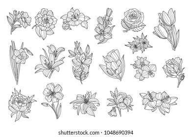 Set of beautiful monochrome flowers. Lily, tulip, peony, rose, daffodil, calendula, pansy, petunia. Sketchy icons. Hand drawn vector elements for tattoo or decor