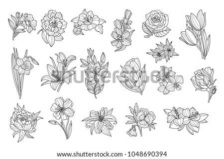 Set Beautiful Monochrome Flowers Lily Tulip Stock Vector Royalty