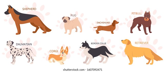 Set of beautiful purebred dogs. Collection of dogs of various breed. Cute funny domestic pet. Group of animal. Isolated vector illustration in cartoon style