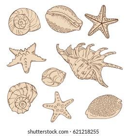 Set of beige seashells on white background. Hand lettering. Hand drawn vector illustration.