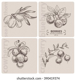 Set of berries - Cranberry, Blueberry, Cowberry and Sea-buckthorn. Hand drawn vector illustration