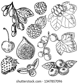 Set of berries. Vector cartoon illustration. Isolated objects on a white background. Hand-drawn style.