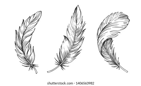 Feathers Outline Images Stock Photos Vectors Shutterstock Owl feather tattoo outline new feather owl bird flowers designs tattoo. https www shutterstock com image vector set bird feathers hand drawn illustration 1406563982