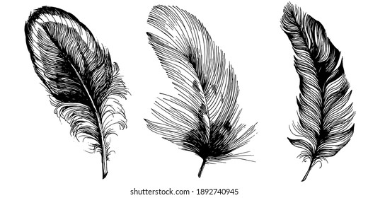 Set of bird feathers isolated with sketch style for your creative design invitation or post cards.