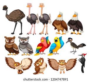 Set of bird on white background illustration