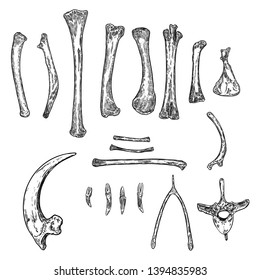 Set of bird skeleton bones for magic cult , wishbone, arm, wing, limb, leg, spine ring, rib, claw or nail. Hand drawing. Witch magic design elements set. Sketch warlock magician collection. Vector.