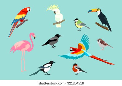 Set of birds. Bright exotic tropical birds. Macaw, Cockatoo, flamingo, toucan, magpie, crow, bullfinch, tit, sparrow. Vector.