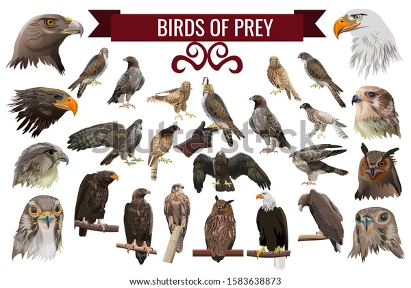 Set Birds Prey Raptors Collection Vector Stock Vector Royalty Free 1583638873