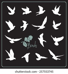 Set of birds silhouettes - flying. White on a black background.