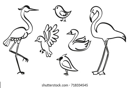 Set of birds sketched with ink. Vector graphic set of hand drawn birds. Simple lines