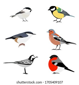 Set of birds vector: brown-headed nut, great tit, nuthatch, Finch, bullfinch, white Wagtail, isolated on a white background. Illustration