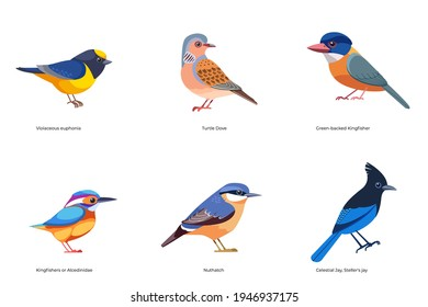 Set of birds vector: Turtle Dove, Green-backed Kingfisher, Alcedinidae, Nuthatch, Celestial Jay, Violaceous Euphonia, forest wild birds cartoon, flat style birds Illustration isolated on a white.