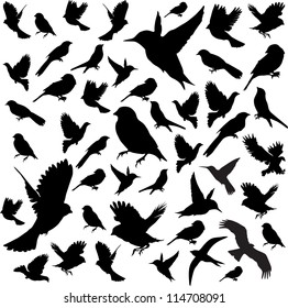 Set Birds.Vector illustration
