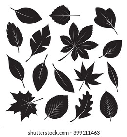 Set of black different tree leaves on white background. Vector Illustration. EPS outline file.