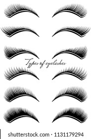 Set of black eyelashes of different types. Vector illustration.