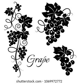 Set of black grapevine silhouettes. Vine design. Vector illustration.