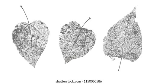 Set of black gray skeletons leaves on white background. Fallen foliage for autumn designs. Natural leaf aspen and birch. Vector illustration.