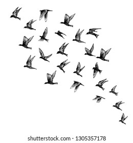 Set of black hand drawn strokes birds, flock. Drawing sketch. On white background. Inspirational body flash tattoo ink.  Vector.