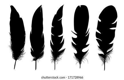 set of black  isolated feathers on white background