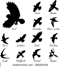Set of black isolated vector silhouettes of birds.  Vector illustration.  Lark, Shrike, Owl, Partridge, Stone-curlew, Dove, Jackdaw, Rook, Starling, Swift, Chaffinch, Kestrel, Magpie