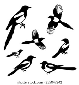 Set of black isolated vector silhouettes of birds (magpie). Vector illustration.