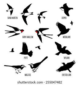 Set of black isolated vector silhouettes of birds (sand martin, dipper, barn swallow, wood lark, lark, pipit, skylark, wagtail, crested lark). Vector illustration.