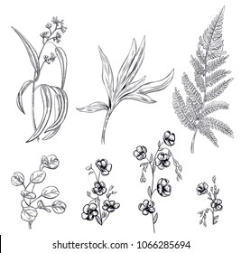 Set of black monochrome flowers and greenery: chamomiles (daisy), leaves of peony, fern, eucalyptus, silver dollar on white background, hand draw, engraving vintage sketch style, botanical vector
