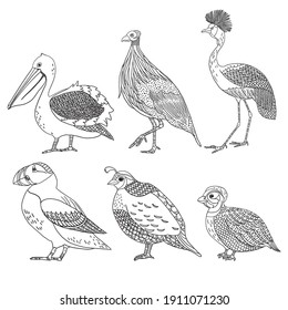 Set of black outline vector doodle sea birds pelican guineafowl crane puffin and quail on white background
