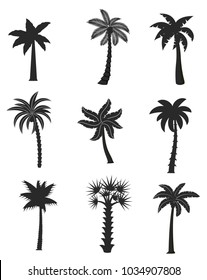 Set of black palm icons isolated on white background. Vector illustration with different shapes palm