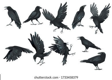 Set of black raven bird in different poses cartoon crow design flat vector animal illustration isolated on white background
