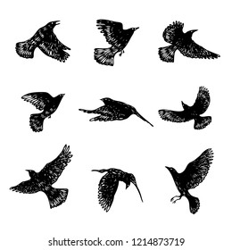 Set of black raven birds, hand drawn crows flock. Drawing sketch. Vector.