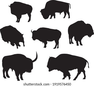 Set of black realistic silhouettes of American bison isolated on the white background. Vector illustrations