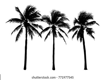 set of black silhouette coconut tree, isolated natural plant sign, silhouette vector illustration